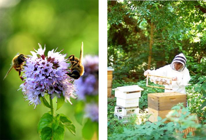 Therapeutic treatment not only by bees